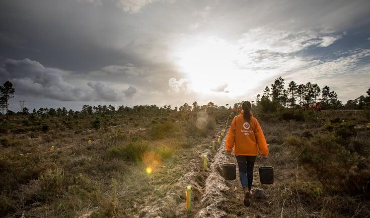 Galp vai regressar a Leiria para plantar mais de 12.000 árvores